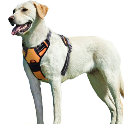 #10. Eagloo Dog Harness