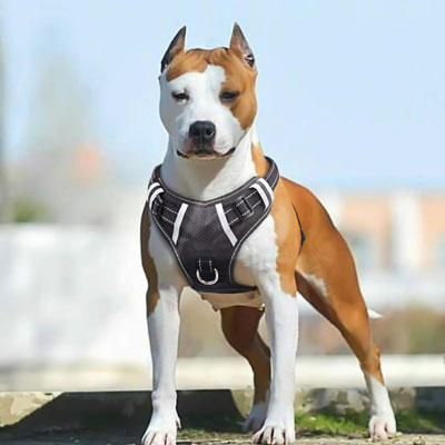 #7. Big Dog Harness