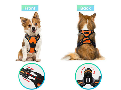 Top 10 Best Dog Harness in 2019 Reviews